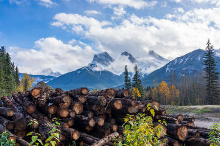 Log stacks along the forest at sunny day. Snow capped The Three Sisters trio of peaks in the background. Canmore, Alberta, Canada. Lumber yard wood stack timber construction lumbering forestry cut. Stock fotó