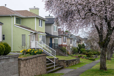 Cherry blossom full bloom in Vancouver city residential avenue. BC, Canada. Stockfoto