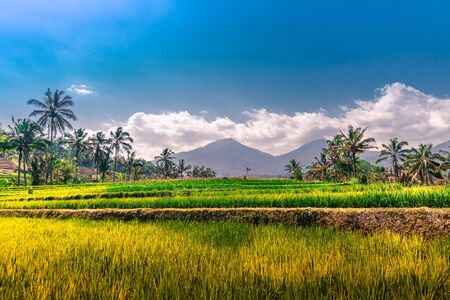 Rice terraces under a cloudy blue sky in Bali, Indonesia