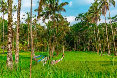 A clothesline among rice crops in Tegallalang Rice Terraces in Ubud, Bali, Indonesia Stock Photo