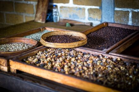 Selection of coffee beans in trays at a coffee plantation in Bali, Indonesia