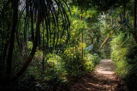 A pathway leading into a luscious jungle forest in Singapore, with green trees and jungle plants and the sun lighting up the walkway on the right Standard-Bild
