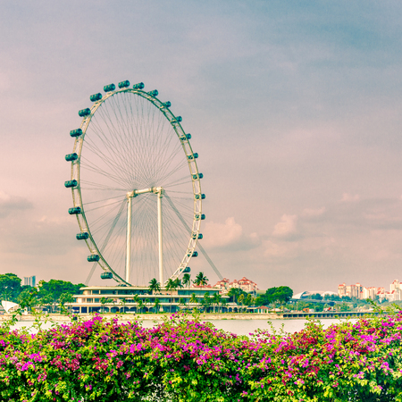 The Singapore Flyer, which is a giant observation wheel, with pink flowers in the foreground and a soft sunset in the sky in Downtown Core, Singapore, Asia