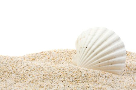 scallop: Large beautiful sea shell with sand on white background