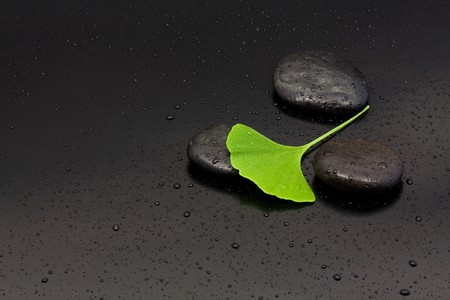 waterdrop: Ginkgo leaf on black pebbles with water drops over black background