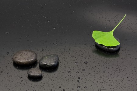 Ginkgo leaf on black pebbles with water drops over black background photo