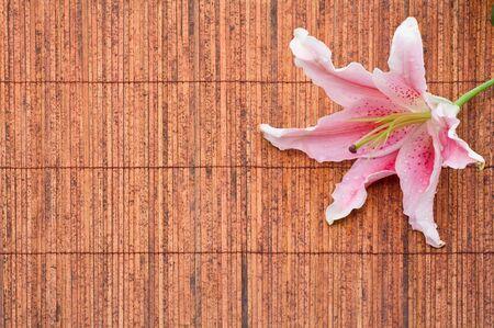 stargazer lily: Beautiful pink stargazer lily (Lilium Stargazer) on bamboo mat with waterdrops