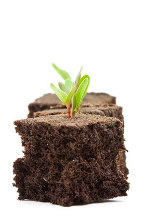 Three seedlings in turf over white background Stock Photo - 7304390