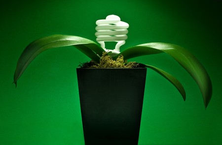 Energy preservation concept with lightbulb growing plant photo