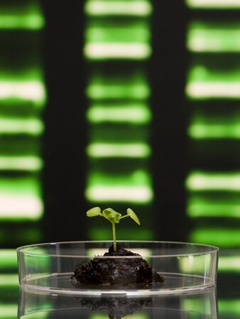 Plant in petri dish in front of DNA pattern - biotechnologie concept photo