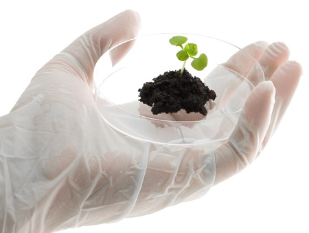 Biotechnology researcher holds plant specimen in petri dish photo