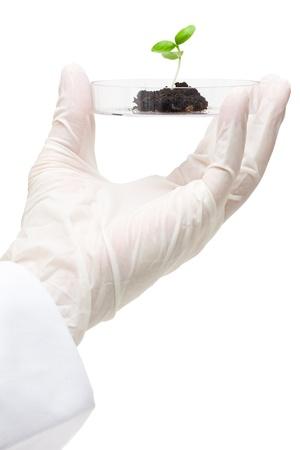 petri: Biotechnology researcher holds plant specimen in petri dish