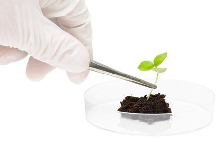 Biotechnologie-Forscher stellt Anlage Muster in Petrischale Lizenzfreie Bilder