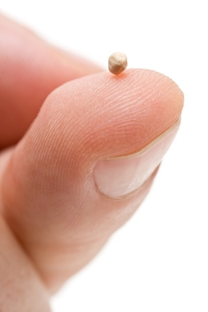 Mosterdzaad op vingertop - symbool van het geloof Stockfoto