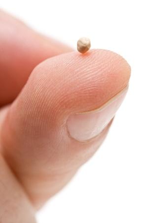 semilla: Semilla de mostaza en la punta de los dedos - s�mbolo de la fe