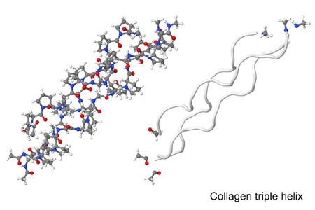 Collagentripelhelix Molekül in verschiedenen Visualisierungen isoliert auf weißem Hintergrund