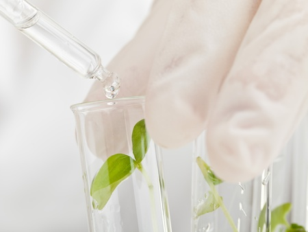 plant science: Scientist drops liquid on plant specimen in test tubes