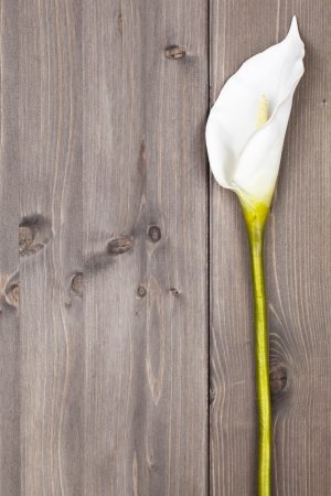 anthurium: White anthurium flower on wooden planks with copy space