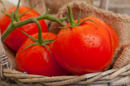 Fresh harvested organic tomatoes on wooden table photo
