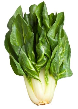 Organic fresh chard plant isolated on white background