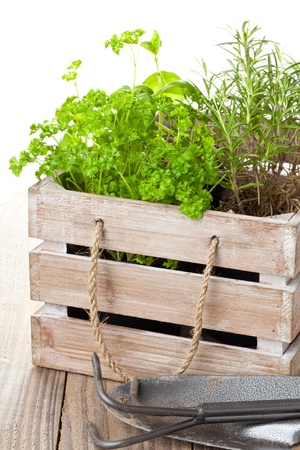 indoor plants: Fresh organic potted herbs in wooden crate on table with gardening tools
