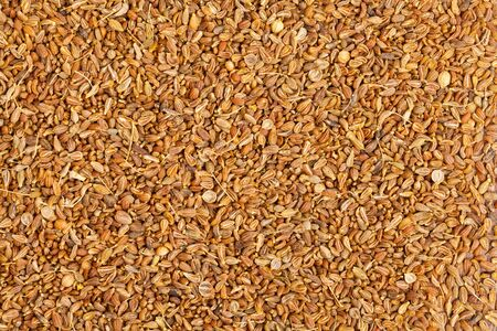 aniseed: Frame filling background of organic dried anise seeds