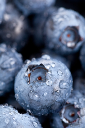 close up food: Fresh organic blueberries close up with selective focus and water droplets
