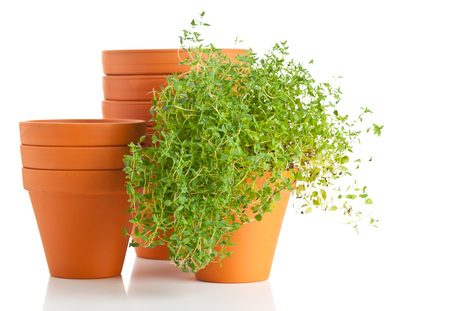 Stacked empty plant pots with herbs on white background photo