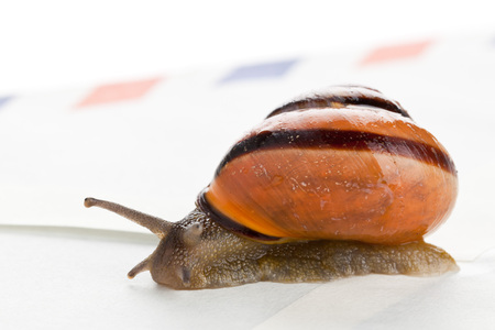 Snail on air mail envelope over white background - slow snail mail concept