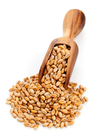 Raw wheat seeds on wooden scoop over white background photo