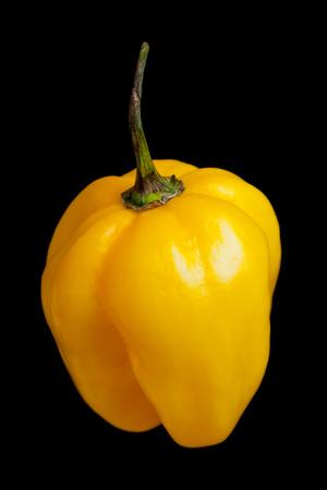 habanero: One Habanero chili isolated on black background
