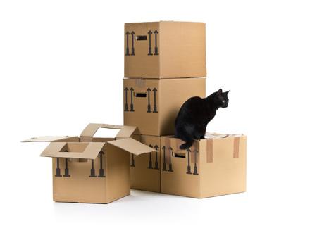 Black cat avec empilés mobiles des boîtes en carton sur fond blanc Banque d'images