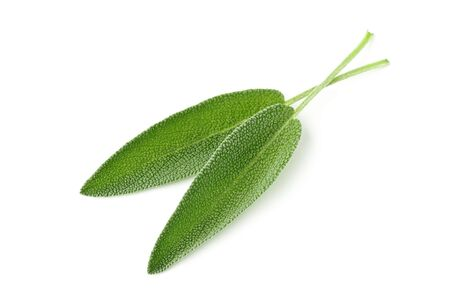 Two fresh, organic sage leaves over white background