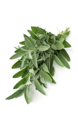 Single fresh harvested organic bundle of sage twigs over white background