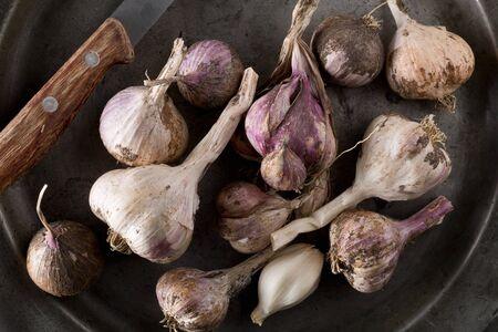 Freshly harvested garlic bulbs on rustic metal plate on kitchen table Standard-Bild