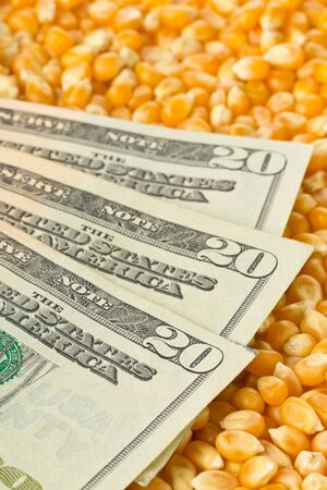 Dollar banknotes on corn or maize kernels background - corn cost or prize concept, selective focus