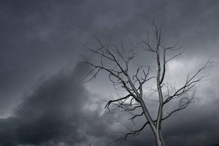 tempest: Tempest  Seattle, Washington - 2015