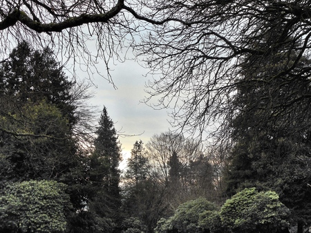 evergreens: Evergreens  Seattle, Washington -2015