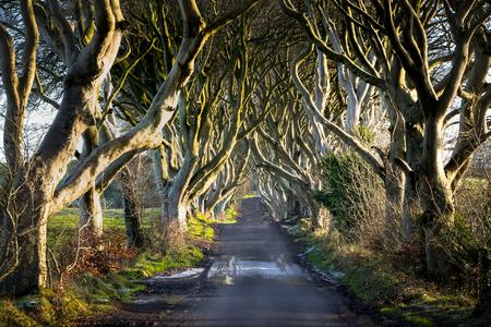 Dies ist ein Bild der Dark Hedges in Nordirland bei Sonnenuntergang. Es sind alte Bäume, die eine Landstraße säumen, die als Drehort für mehrere Produktionen diente