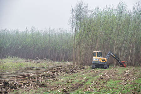 Derry, UK - April 9, 2020: CP Hire digger harvesting willow tree biomass for fuel.
