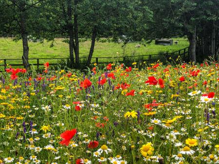 Wild flowers in a field in Ireland