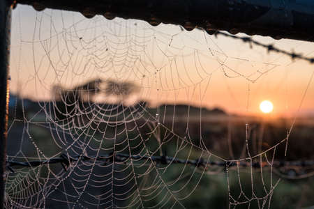 First rays of the sunrise hitting dew on a spiders web on an early autumn morning in Ireland