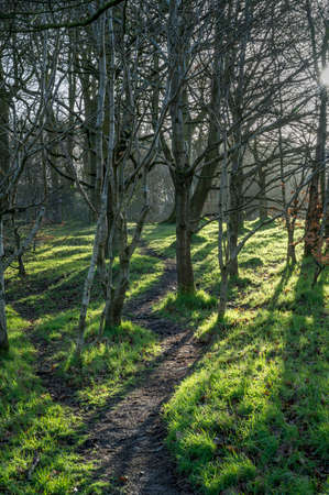 Morning sunshine casting shadows on a twisting forest path in Ireland