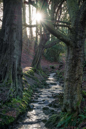 Morning light coming through the trees to light up a forest stream Stock fotó