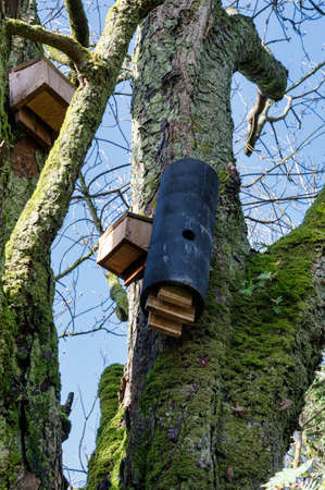 Wooden Bat houses attached to a tree in Ireland