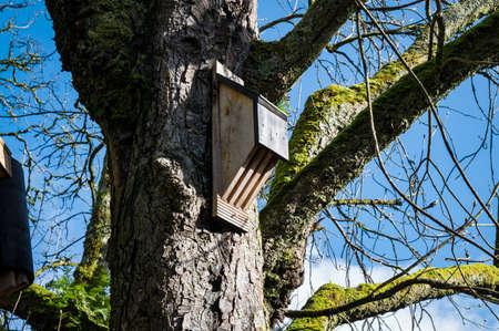 Wooden Bat house attached to a tree in Ireland