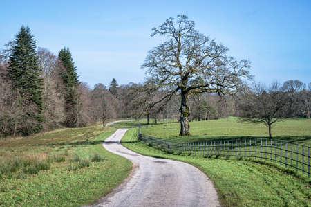 Rural gravel country road in Ireland Stock fotó