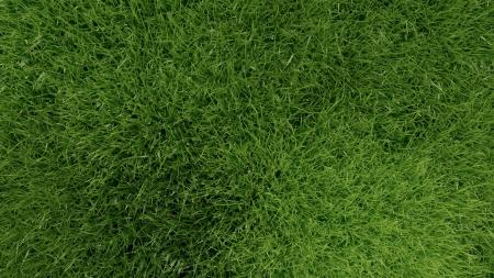 3d green grass background texture.