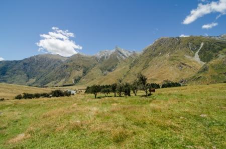 Prairie paisible avec des arbres et des montagnes