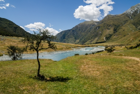 Peaceful meadow Standard-Bild